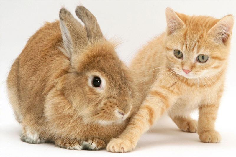2023 - год Кота или Кролика