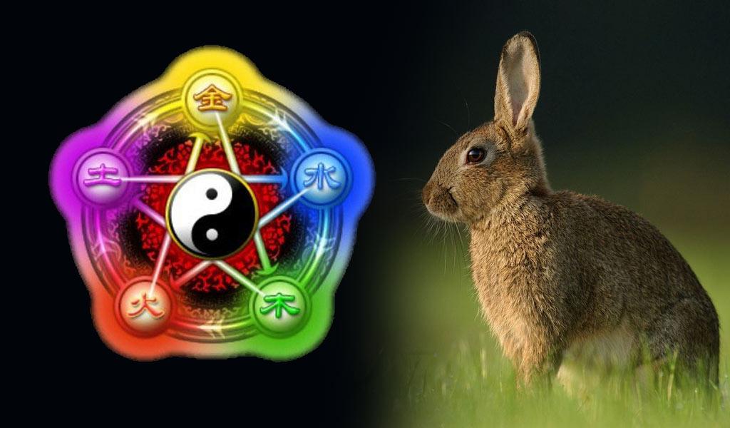 2023 год Кролика - особенность стихии воды