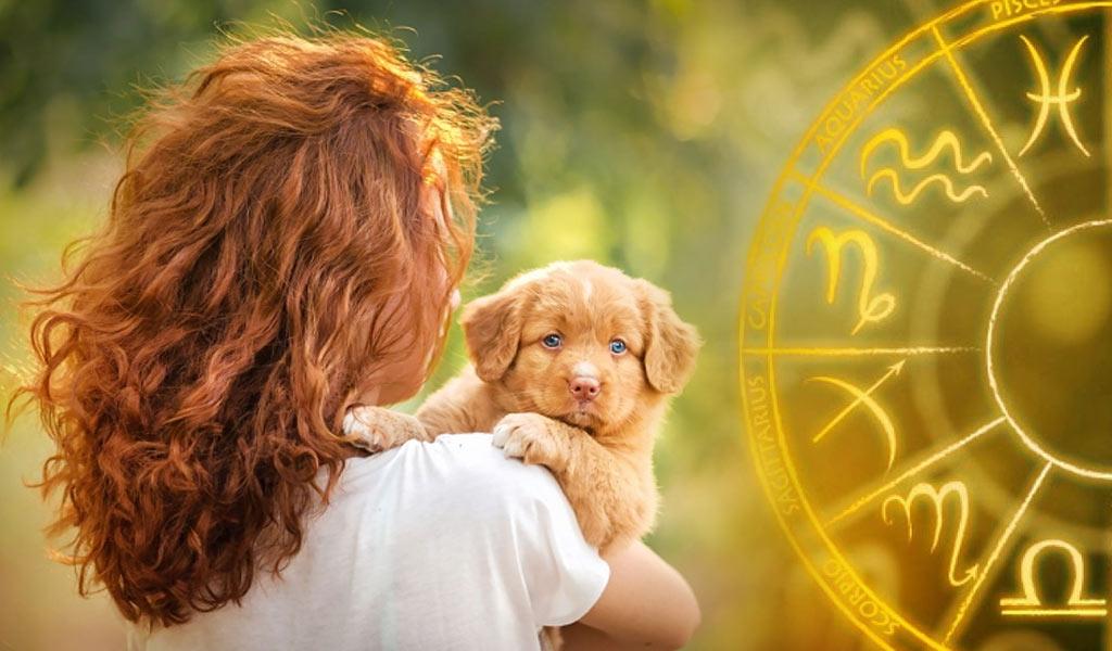 Гороскоп на 2023 год для женщины Собаки