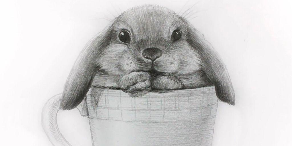 Кролик в чашке карандашом