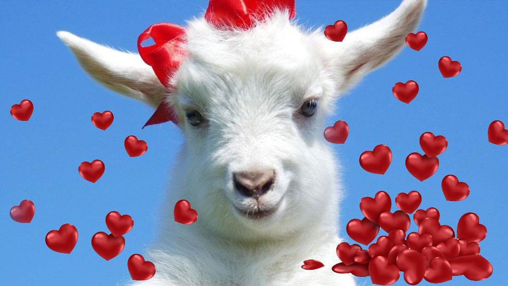 Любовный гороскоп на 2023 год для рожденных в год Козы