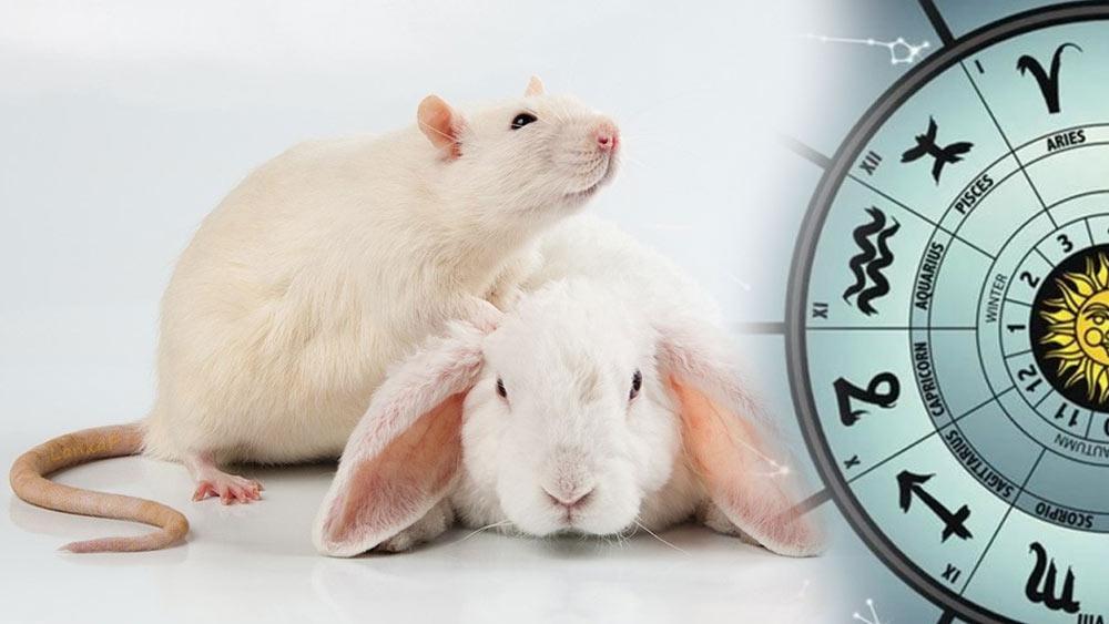 Полный гороскоп на 2023 год Кролика для  Крысы