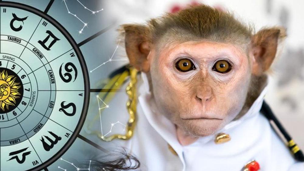 Гороскоп на 2023 год для людей, рожденных в год Обезьяны