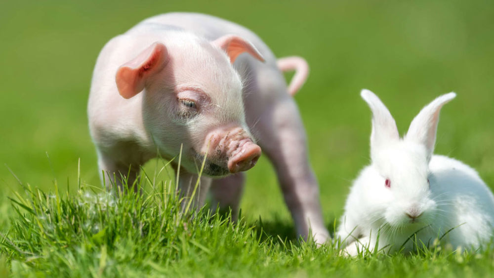 Гороскоп для рожденных в год Свиньи на 2023 год Кролика