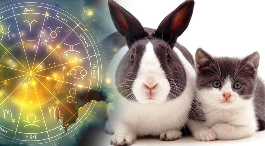 Гороскоп на 2023 год для женщин и мужчин Кроликов