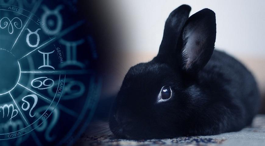 Что ждет людей, рожденных в год Кролика в 2023 году