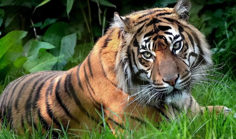 Гороскоп на 2023 год для женщин и мужчин Тигров