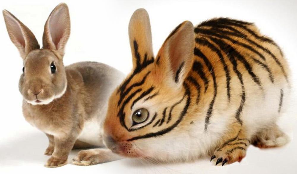 Гороскоп для Тигра на 2023 год Кролика