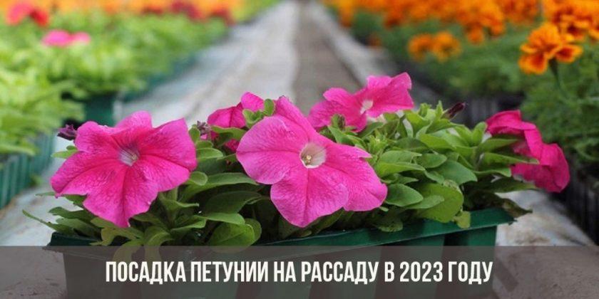Посадка петунии на рассаду в 2023 году