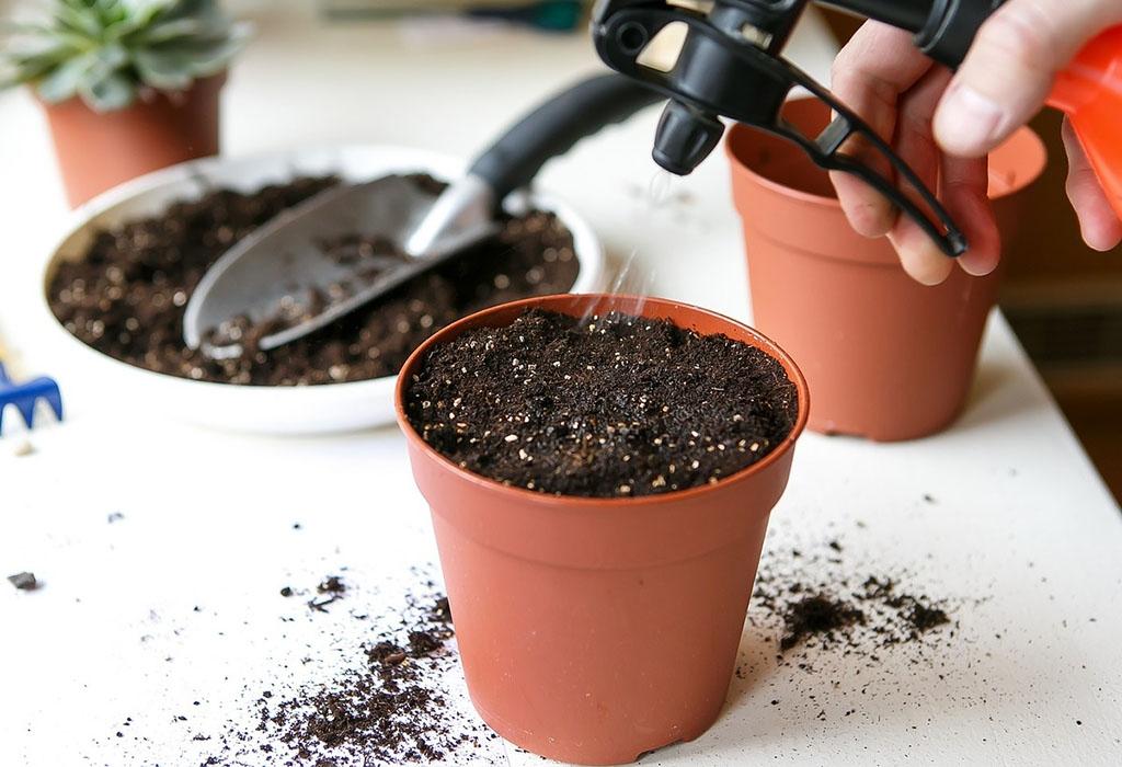 Опрыскивание семян петунии