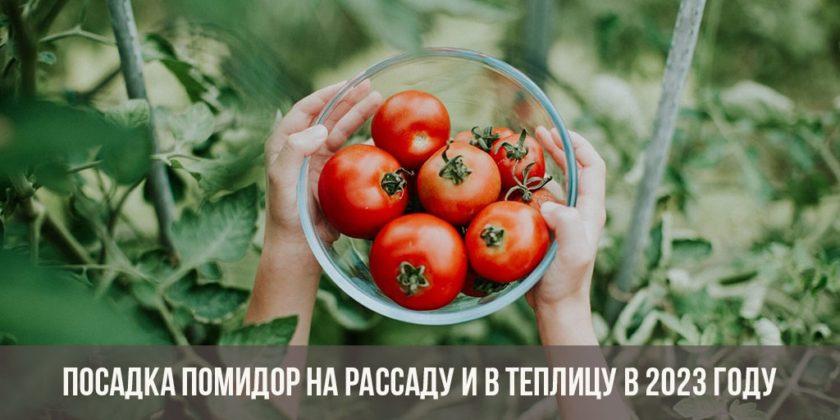 Посадка помидоров на рассаду и в теплицу в 2023 году