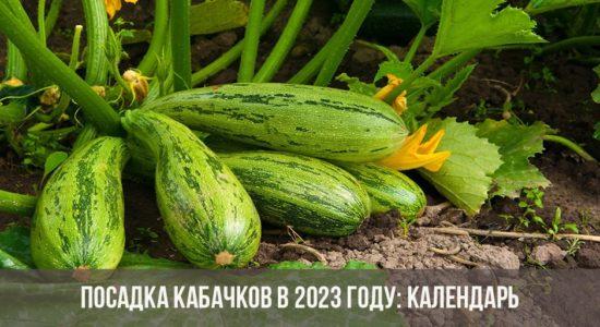 Посадка кабачков в 2023 году: календарь