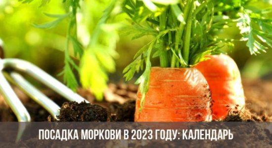 Посадка моркови в 2023 году: календарь