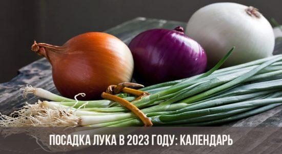 Посадка лука в 2023 году