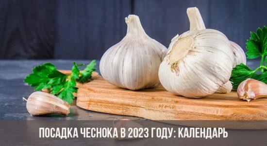 Посадка чеснока в 2023 году
